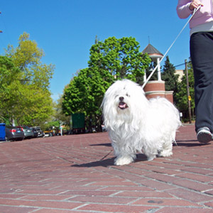 Best Dog Walker Corona del Mar