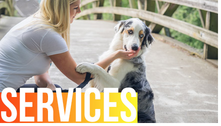 Services and Rates from SNIFF OC