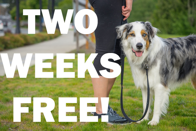 Two Weeks Free From SNIFF Dog Walkers Orange County